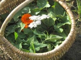Die biologischen Blumen und Kräuter, Bio Agrotourismus Casa Essenia