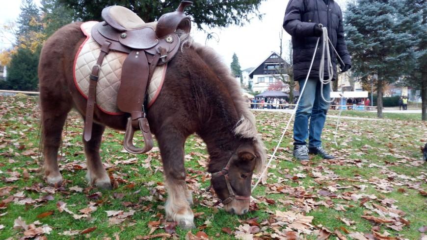 Kleines Pony im Bleds Parks, Foto von Silvia Ombellini