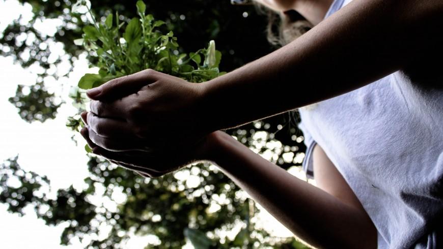 Positive Auswirkungen der Bäume