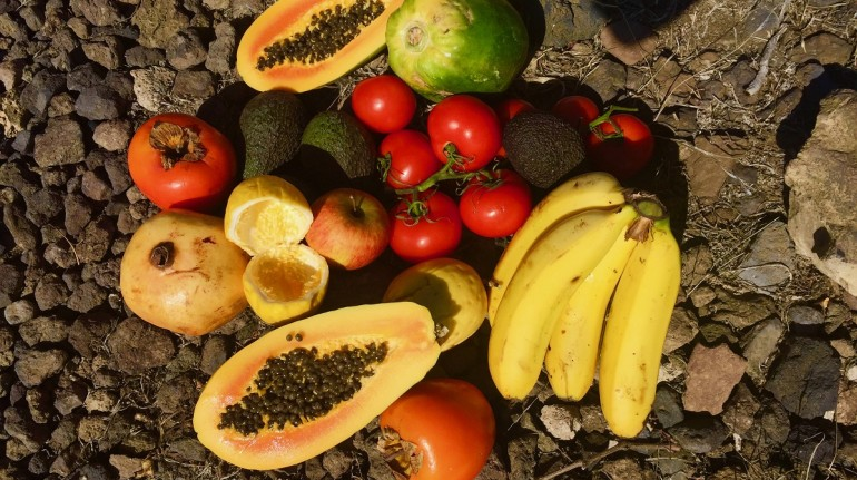 ökologischen Gemüse-und Obstgarten, La Tanquila