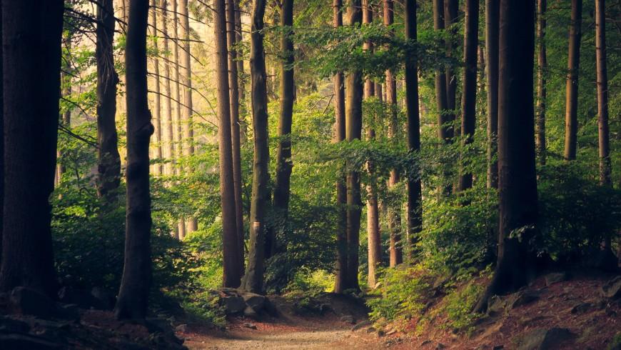 Ecobnb Nacht im Wald