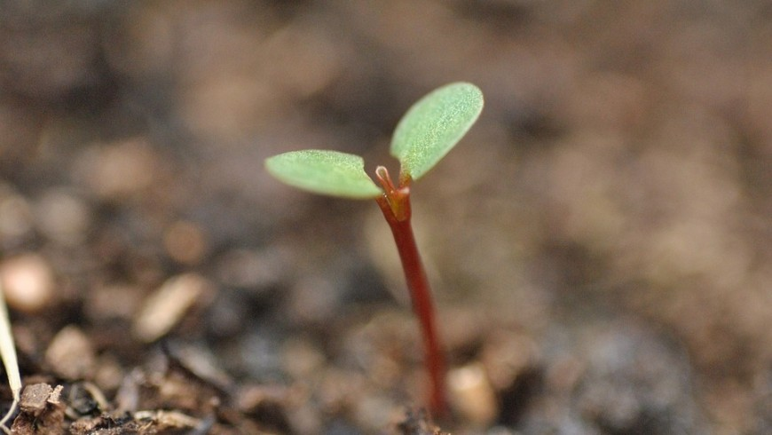 Ecobnb Baum pflanzen