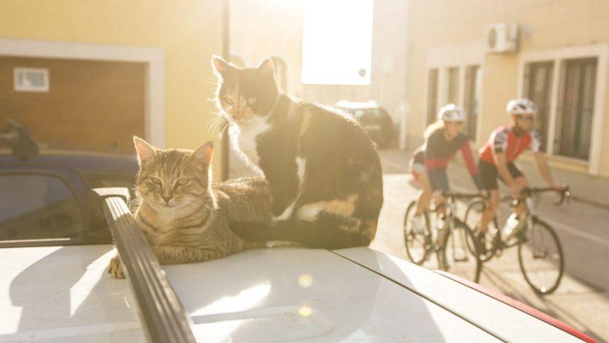 Katzen Route Istrien